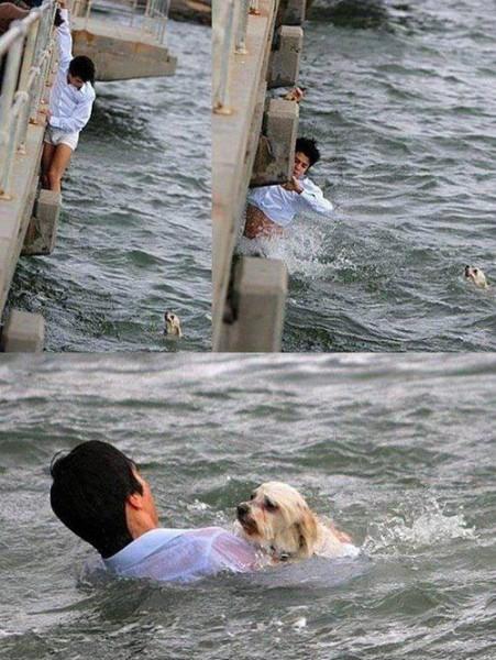 Ljudska dobrota Act-of-kindness-man-rescued-dog-in-river-451x600
